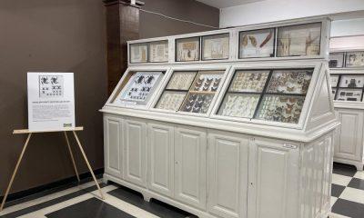 Националният природонаучен музей при БАН осъмна с витрина с дронове сред препарираните пеперуди 215