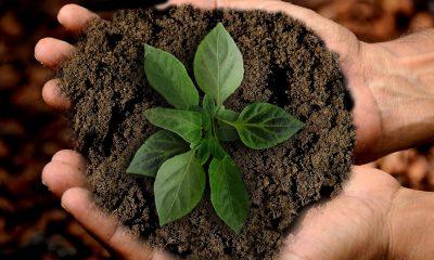 5 ресурса, които да спестиш днес, за да ти благодари природата утре 99