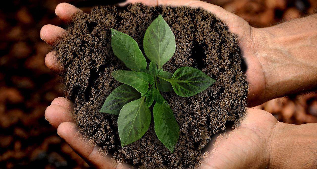 5 ресурса, които да спестиш днес, за да ти благодари природата утре 141